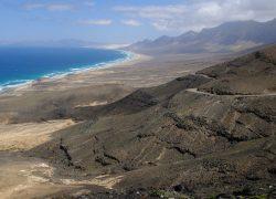 wild Fuerteventura