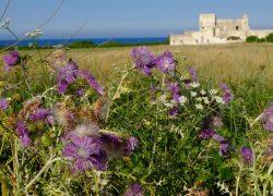 Alla scoperta del Salento: Otranto, le spiagge e i piccoli borghi
