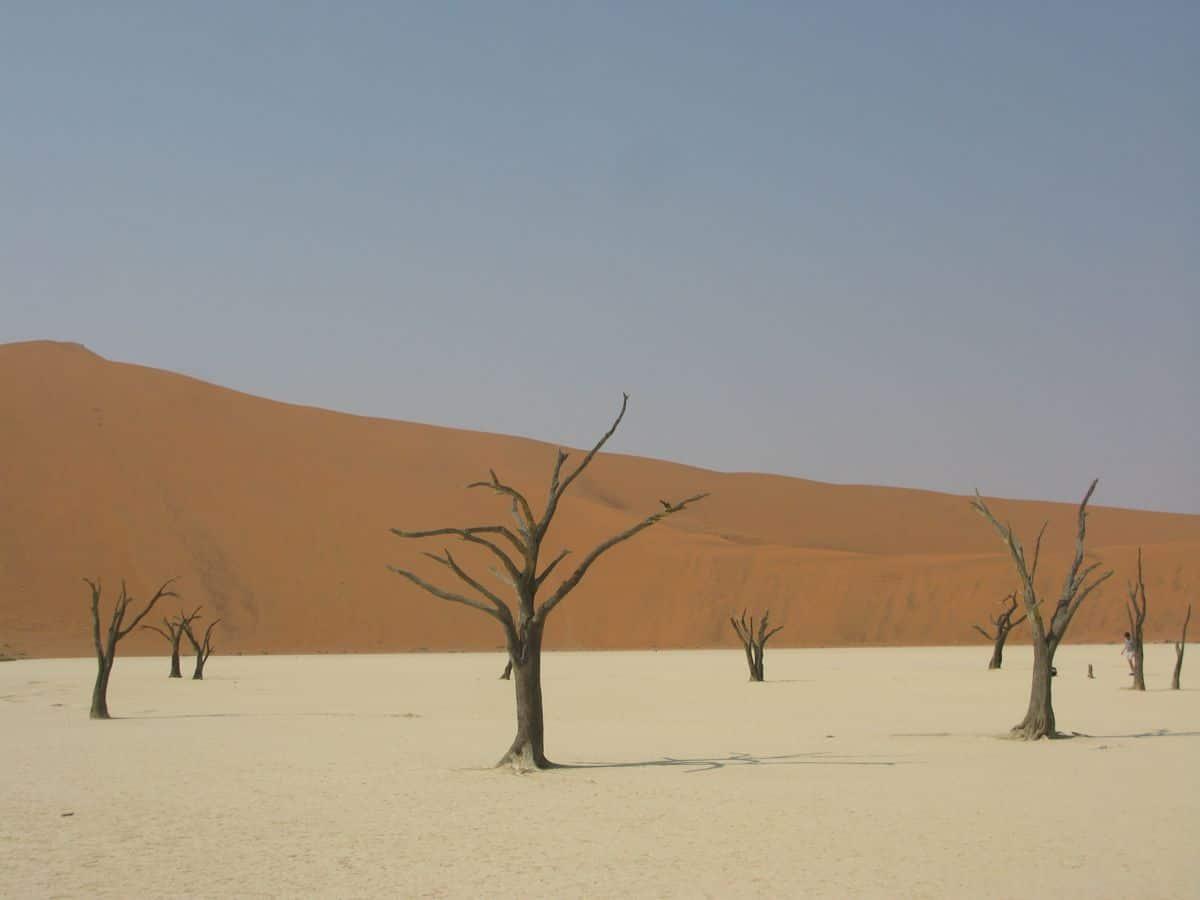 Viaggio in Namibia: 12 giorni tra il deserto del Namib e i safari nell'Etosha