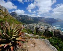 Cosa vedere a Cape Town: 10 esperienze imperdibili