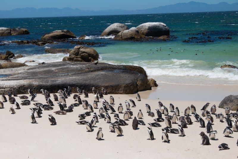 Cape Town - Boulders Penguin Colony Reserve