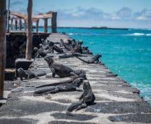Come organizzare un viaggio alle isole Galapagos: tutto quello che devi sapere (quanto costa, quando andare, crociera o no?..)