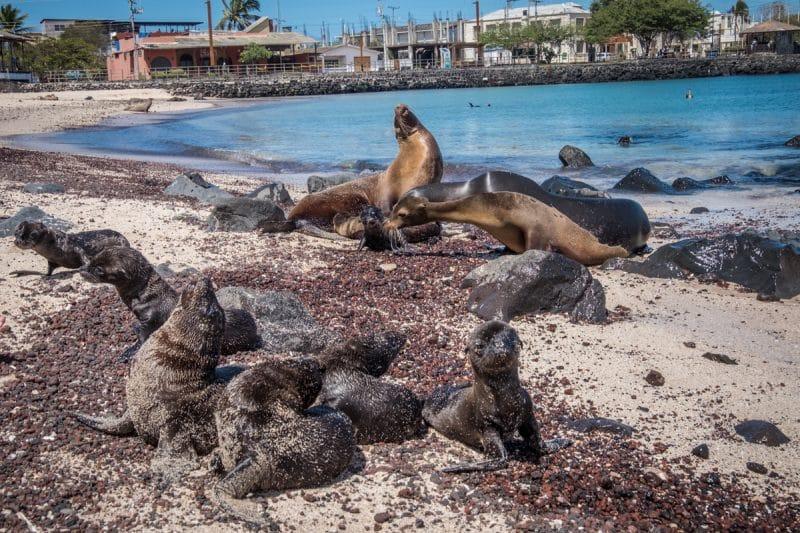 galapagos - leoni marini a san cristobal
