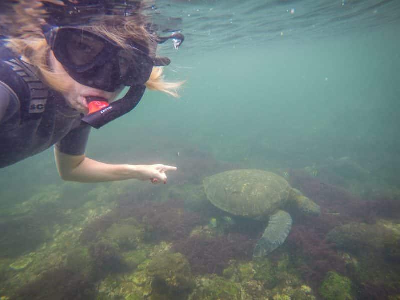 Galapagos - snorkeling