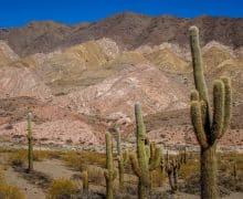 Argentina del Nord: Salta, Cordoba e Mendoza