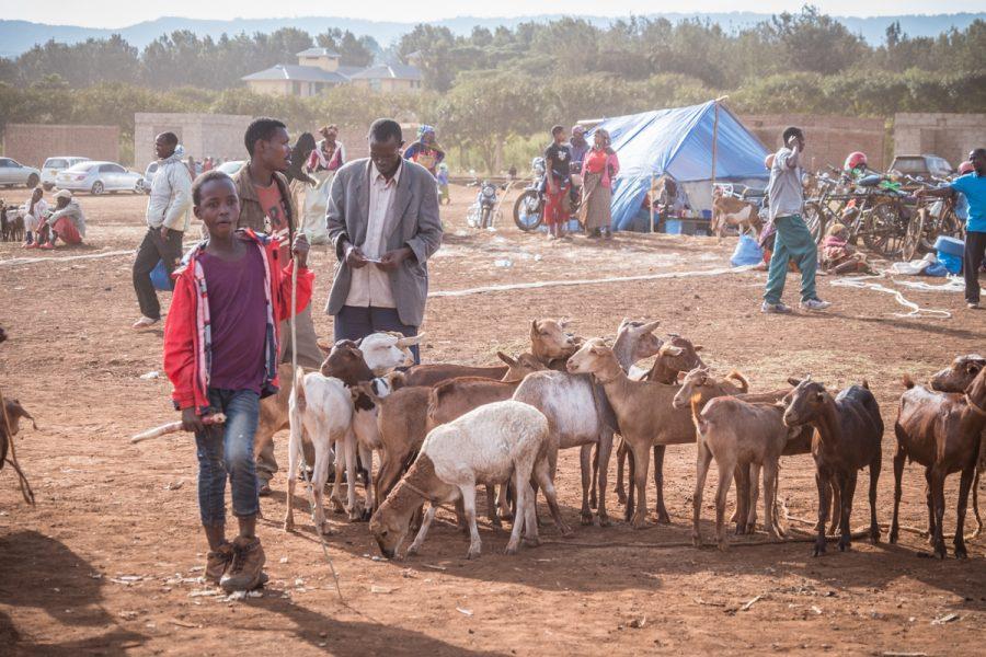 Tanzania-Safari_Karatu