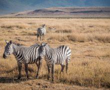 Viaggio in Tanzania: tutti i consigli su come organizzarlo