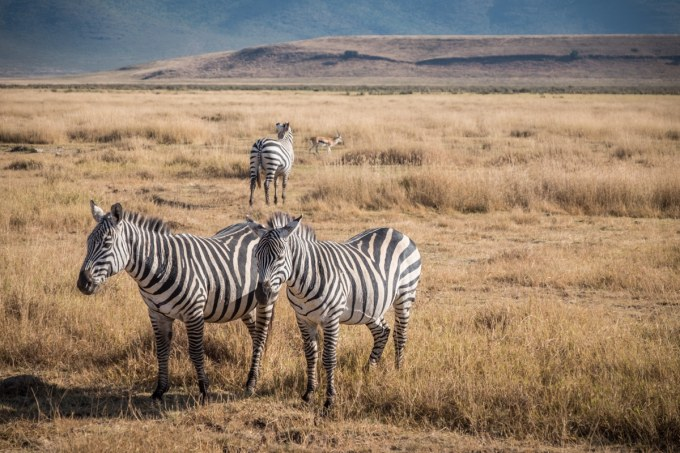 Tanzania-Safari_Ngorongoro