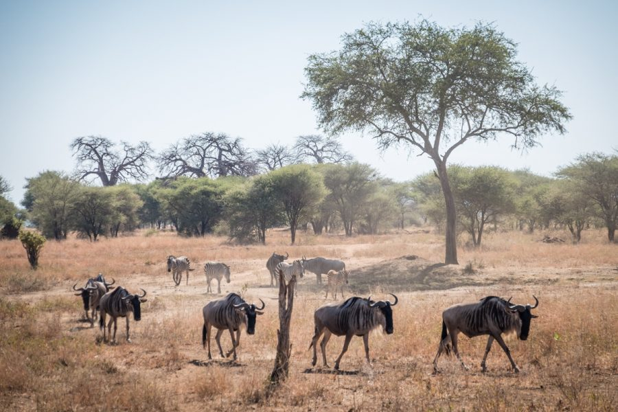 Tanzania-Safari_Tarangire