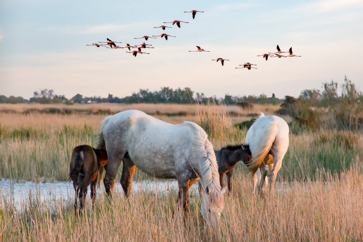 Cosa vedere in Camargue