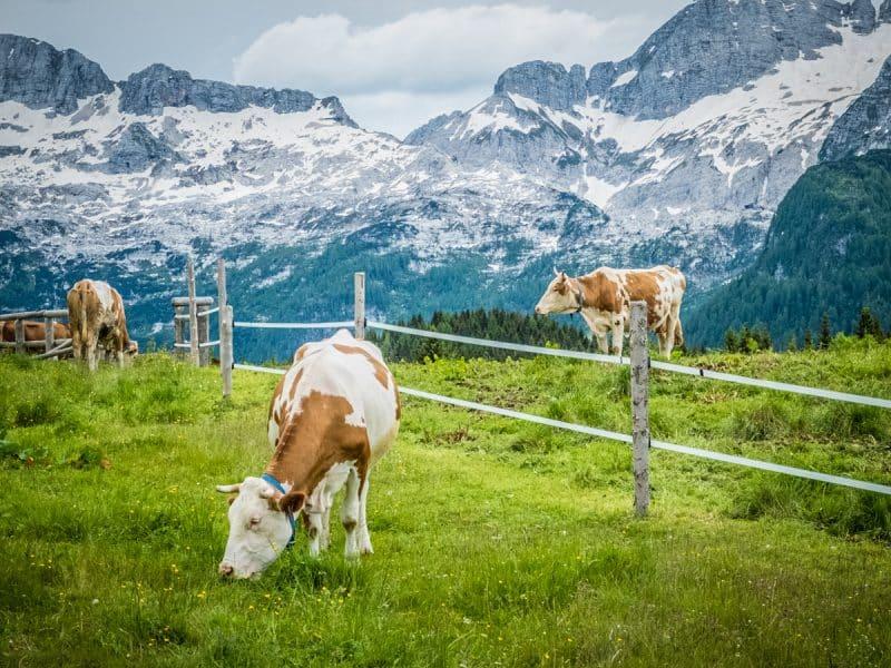 Cosa vedere in Friuli -Montasio