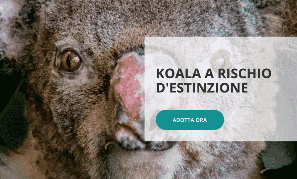Regali solidali- WWF