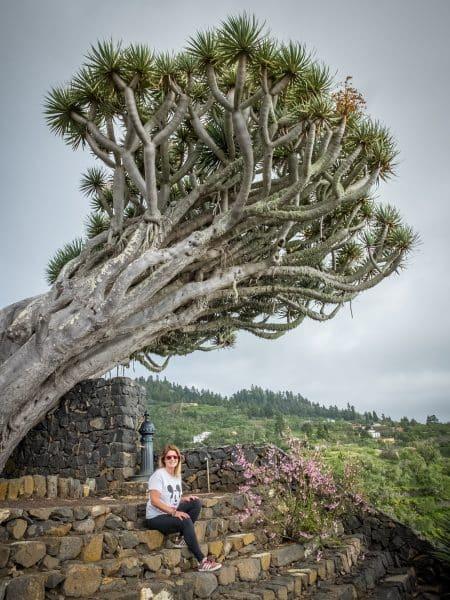 Cosa vedere a La Palma -l'albero del drago