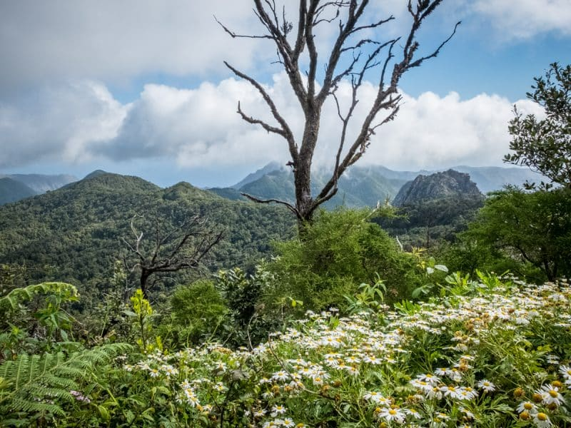 Parque National de Garajonay - La Gomera