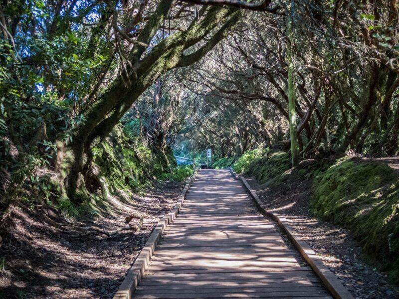 Parque Rural de Anaga  - bosco