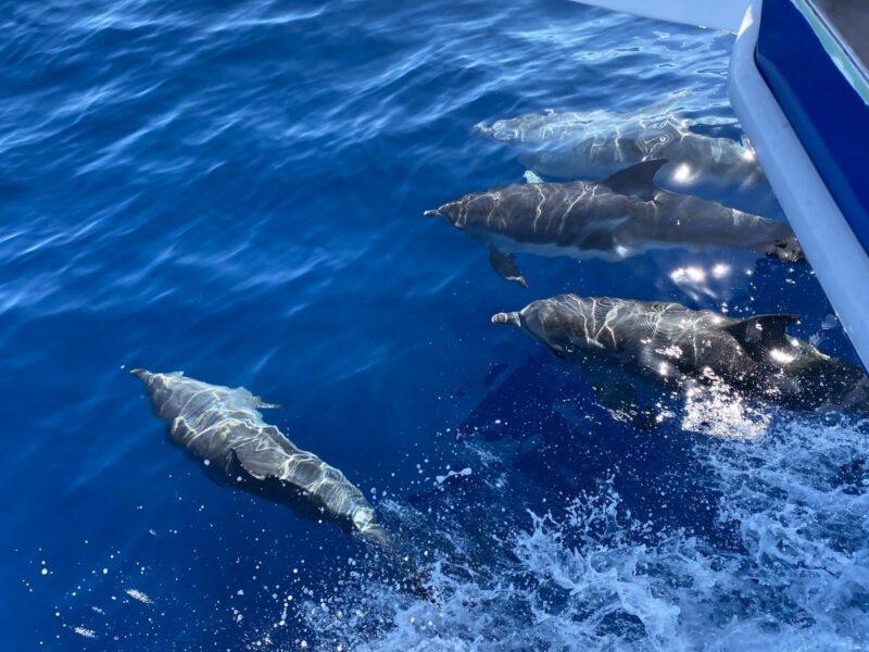 gita in barca per avvistare i delfini a Tenerife