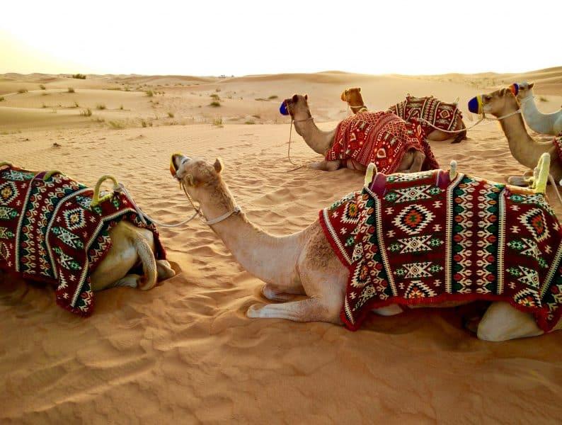 escursioni nel deserto da Dubai